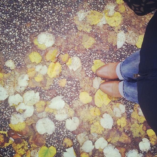 Bonne matinée d'automne ♡