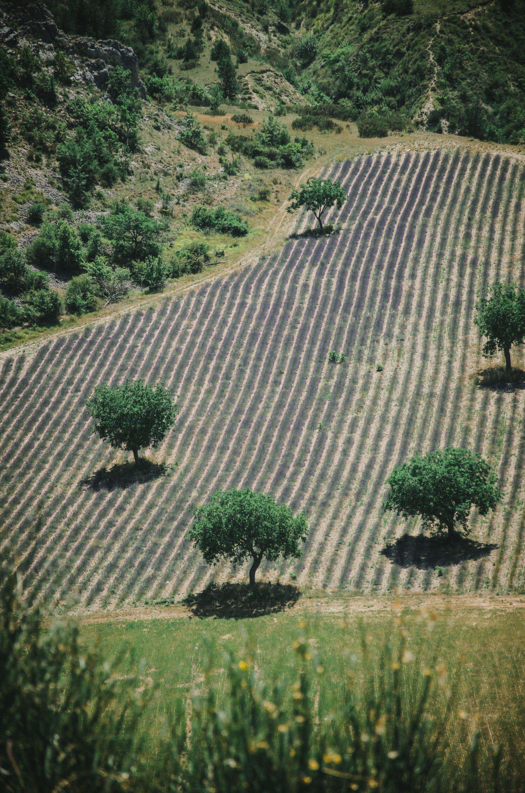Escapade en Provence au pays de la lavande