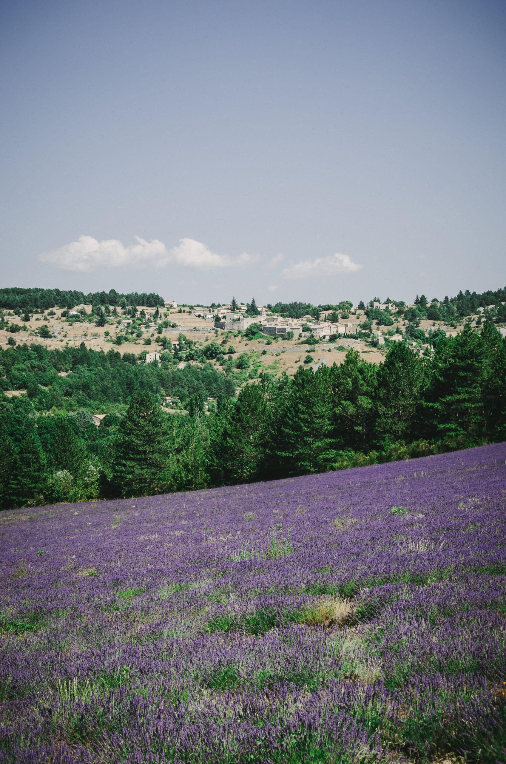 Village d'Aurel et champs de lavande